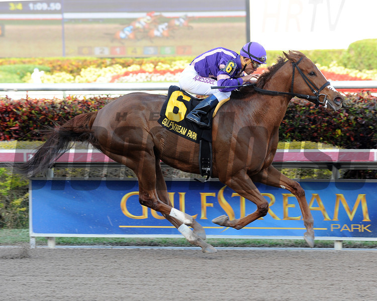 Heart Stealer wins the 2014 Inside Information at Gulfstream Park.<br /> Coglianese Photos/Natalie Fawkes