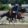 Princess of Sylmar at Belmont Park 6/1/2014<br /> Coglianese Photos/Susie Raisher