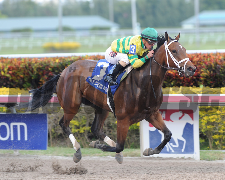 Onlyforyou wins the 2014 Forward Gal Stakes.<br /> Coglianese Photos/Lauren King