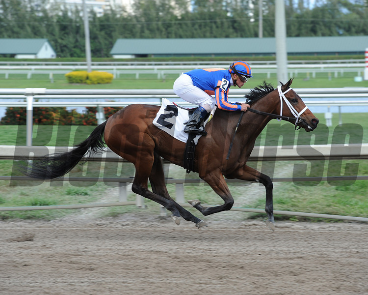 Dunkirk's Best Maiden Win, February 15, 2014 at Gulfstream Park.<br /> Coglianese Photos