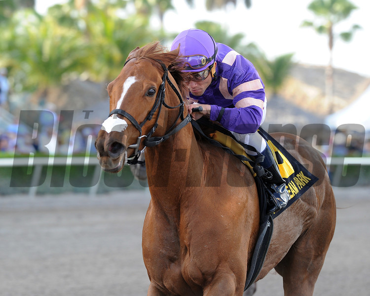 Heart Stealer wins the 2014 Inside Information at Gulfstream Park.<br /> Coglianese Photos/Kenny Martin