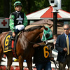 Myfourchix wins the Seeking the Ante at Saratoga 8/24/2014.<br /> Coglianese Photos