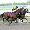 Golden Lad wins an AOC at Gulfstream Park on February 5, 2014.<br /> Coglianese Photos/Lauren King