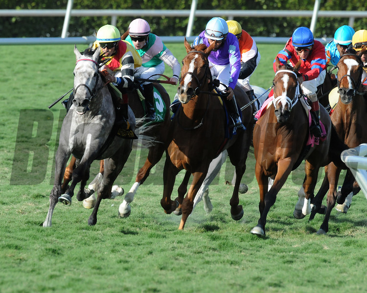 Inimitable Romanee wins the 2014 The Very One at Gulfstream Park.<br /> Coglianese Photos/Shannon Spies