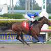 Gambler's Ghost, maiden win at Gulfstream Park, January 1, 2014.<br /> Coglianese Photos
