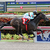 Viva Majorca - Maiden Win, March 29, 2014 at Gulfstream Park.<br /> Coglianese Photos