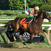 So Lonesome racing in a New York bred race 8/24/2014.<br /> Coglianese Photos