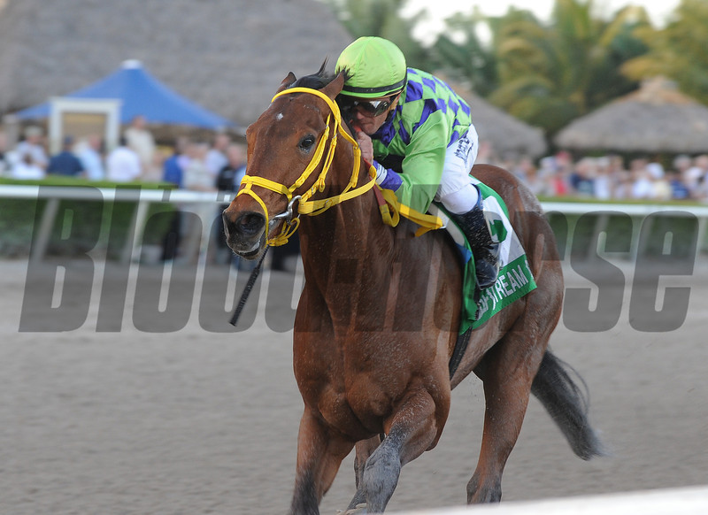 Wildcat Red wins the 2014 Hutcheson Stakes at Gulfstream Park. <br /> Coglianese Photos/Kenny Martin