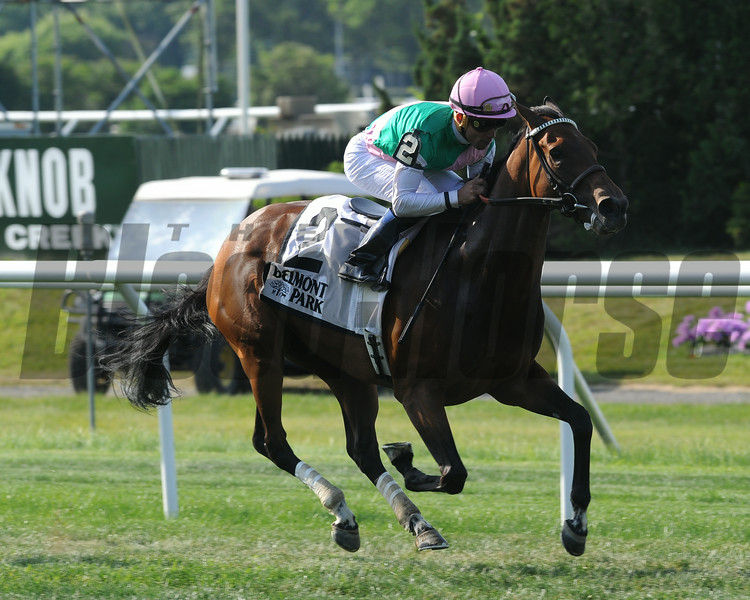 Riposte wins the 2014 New York Stakes at Belmont Park.<br /> Coglianese Photos