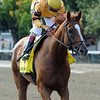 Wise Dan wins the 2014 Bernard Baruch at Saratoga.<br /> Coglianese Photos