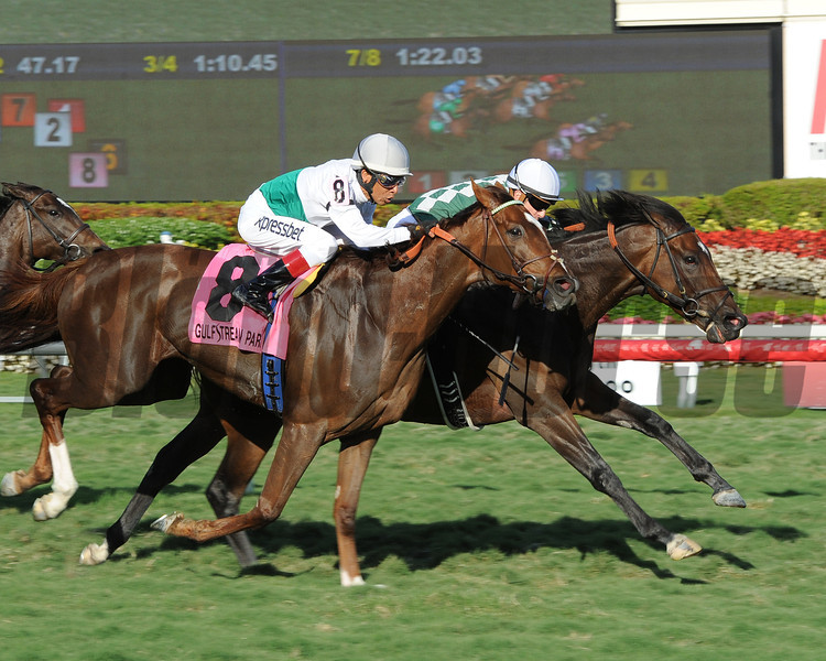 Centre Court wins the 2014 Honey Fox at Gulfstream Park.<br /> Coglianese Photos/Leslie Martin