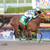 Wildcat Red wins the 2014 Hutcheson Stakes at Gulfstream Park. <br /> Coglianese Photos/Lauren King