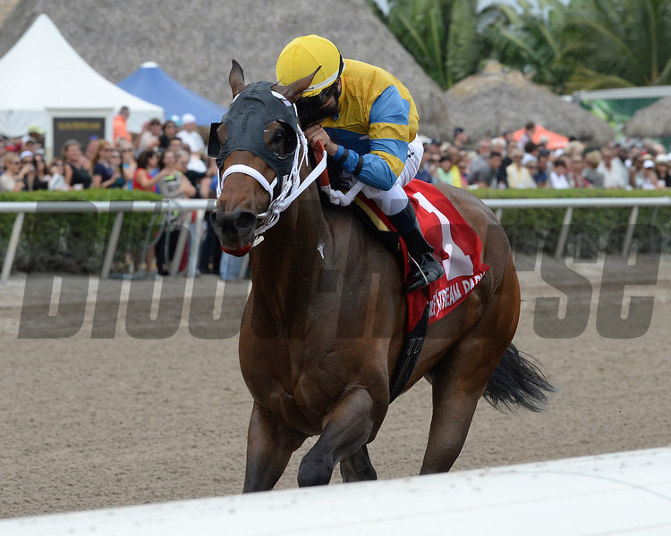 Happy My Way wins the 2014 Sir Shackleton Stakes at Gulfstream Park. <br /> Coglianese Photos/Lauren King