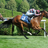 Aventure Love wins an Allowance at Saratoga on July 18, 2014 with Frankie Dettori aboard.<br /> Coglianese Photos