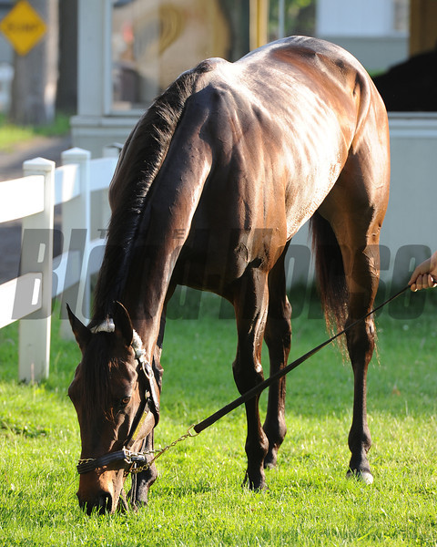 Clsoe Hatches at Belmont Park May 27, 2014<br /> Coglianese Photos/Susie Raisher
