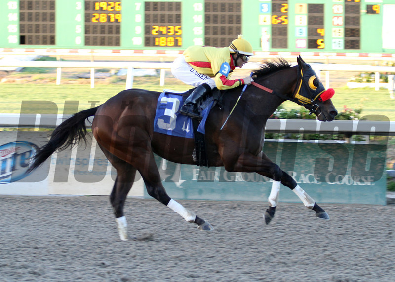 Heitai with jockey Diego Saenz aboard wins the 4th Running of the Costa RIsing Stakes at the Fair Grounds Race Course and Slots in New Orleans, LA Saturday January 11, 2014. The 4-year-old gelding is owned by Rowell Enterprises, Inc and trained by Karl Broberg.