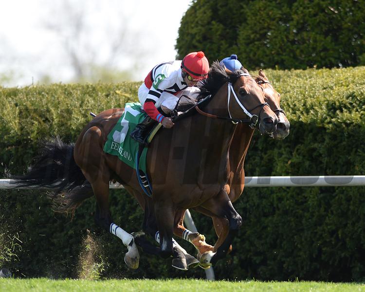 Keeneland Spring 2014; Lexington; KY; photo by Mathea Kelley, Marchman, Robby Albarado up, wins the Shakertown Stakes, 4/12/14