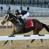 Joint Return wins the 2014 Busher Stakes at Aqueduct.<br /> Coglianese Photos/Joe Labozzetta