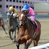 La Verdad wins the 2014 Distaff Handicap at Aqueduct.<br /> Coglianese Photos/Joe Labozzetta