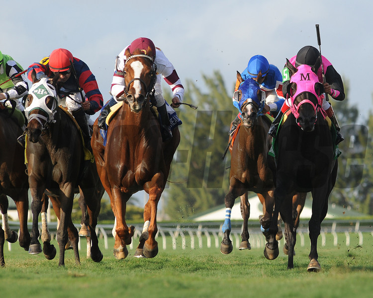 Tapicat wins the 2014 Voodoo Dancer Stakes.<br /> Coglianese Photos/Leslie Martin