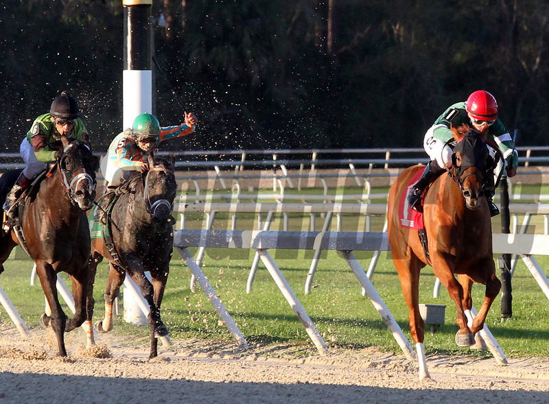 Ring Weekend with Daniel Centeno up wins the Tampa Bay Derby for trainer Graham Motion and Owners West Point Thoroughbreds, Erin Finley, Terry Finely and St Elias Stable. <br /> Photos by Z