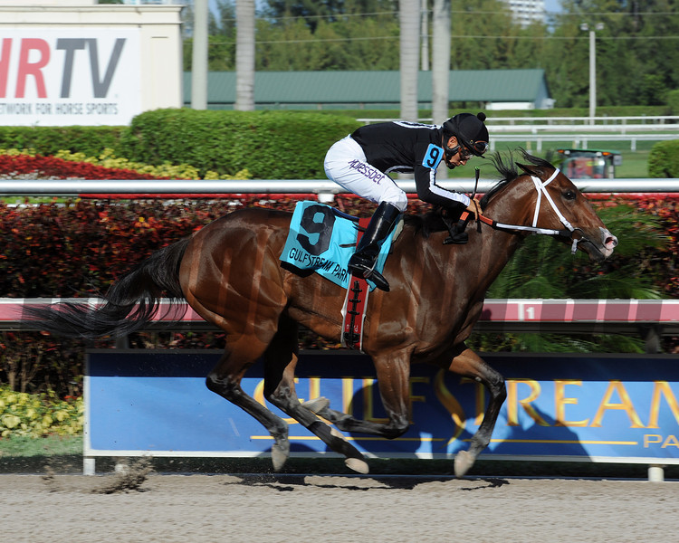 R Free Roll wins the 2014 Hollywood Beach Stakes at Gulfstream Park.<br /> Coglianese Photos/Leslie Martin