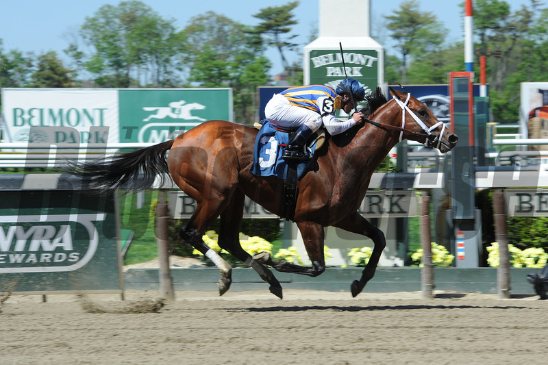 Celebrator wins race 4 at Belmont Park on May 11, 2014.<br /> Photo by: Adam Coglianese/NYRA