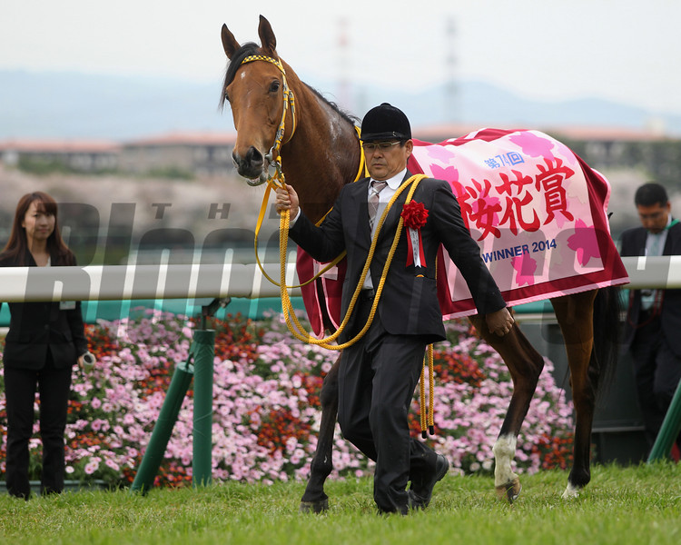 Harp Star wins the Oka Sho 4/13/2014.<br /> Masakazu Takahashi Photo