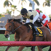 Twilight Eclipse wins the 2014 Mac Diarmida Stakes at Gulfstream Park. <br /> Coglianese Photos/Kenny Martin