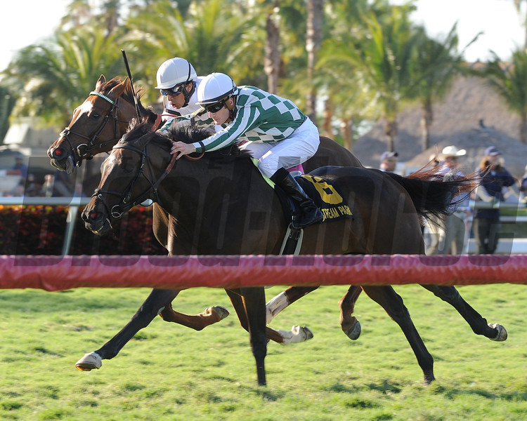 Centre Court wins the 2014 Honey Fox at Gulfstream Park.<br /> Coglianese Photos/Kenny Martin