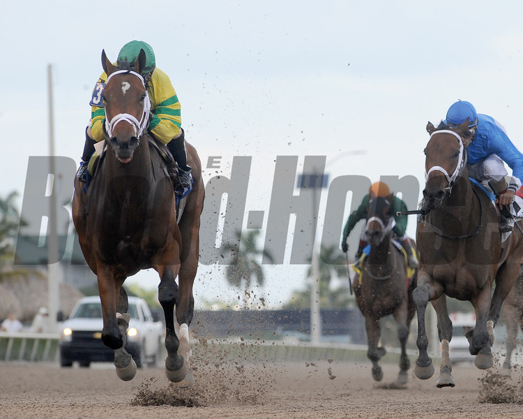 Onlyforyou wins the 2014 Forward Gal.<br /> Coglianese Photos