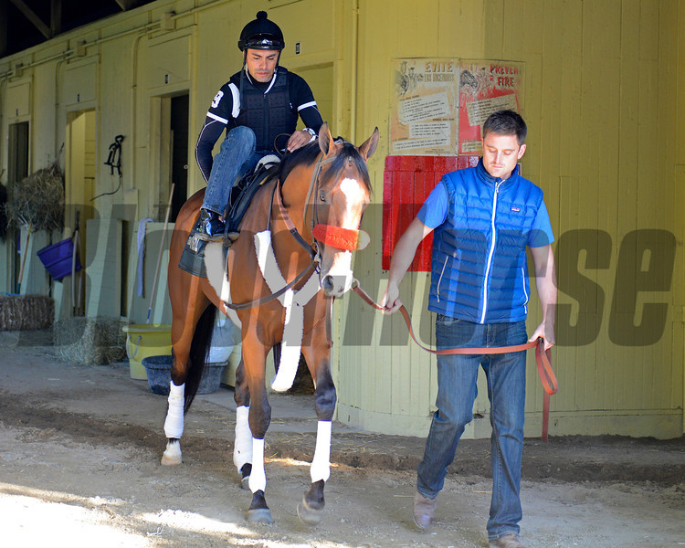 Caption: Goldencents<br /> Belmont and undercard works on June 2, 2014, at Belmont Park in Elmont, N.Y.<br /> MonOrigs2   image730<br /> Photo by Anne M. Eberhardt