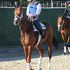 Capo Bastone at Belmont Park 6/1/2014<br /> Coglianese Photos/Susie Raisher