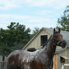 Palace Malice at Saratoga 8/24/2014.<br /> Coglianese Photos/Susie Raisher