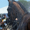 Caption: cooling off in hose after race--Sweet Reason with Irad Ortiz Jr. wins the TVG Acorn.<br /> Belmont Stakes day on June 7, 2014, at Belmont Park in Elmont, N.Y.<br /> 6-Acorn1 image596<br /> Photo by Anne M. Eberhardt