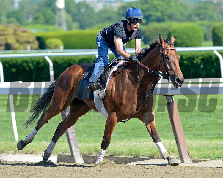 Caption: Beholder works<br /> Belmont and undercard works on June 2, 2014, at Belmont Park in Elmont, N.Y.<br /> MonOrigs1   image804<br /> Photo by Anne M. Eberhardt