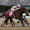Samraat wins the 2014 Gotham Stakes at Aqueduct.<br /> Coglianese Photos