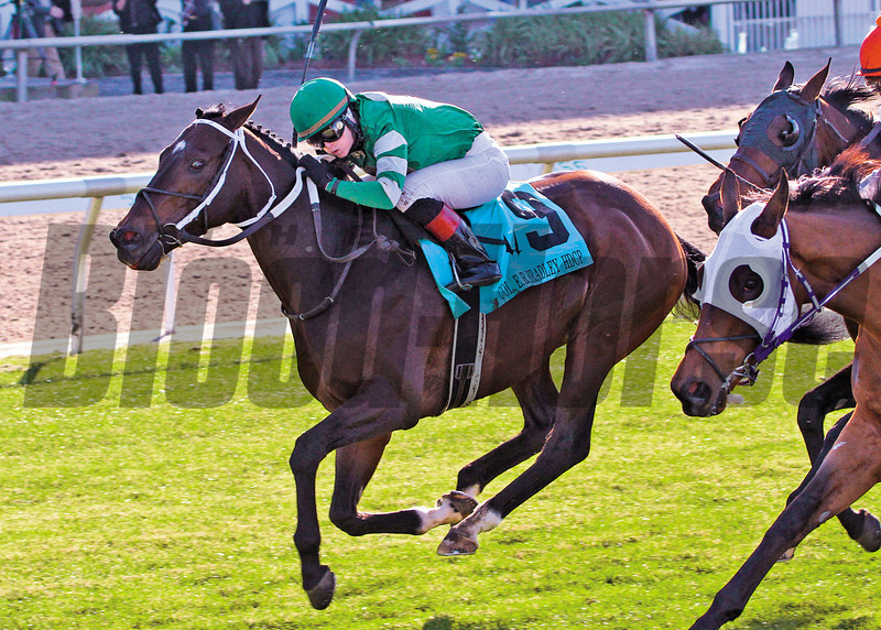 Daddy Nose Best wins the Col. E.R. Bradley Handicap at Fair Grounds in New Orleans, LA Saturday January 18, 2014. Rosie Napravnik was the winning jockey<br /> Photo by Amanda Hodges Weir / Hodges Photogrpahy