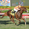 Wicked Tune wins the 2014 Gulfstream Park Turf Sprint.<br /> Coglianese Photos/Lauren King