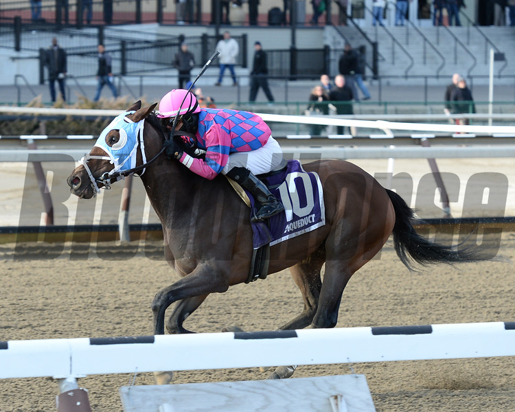 Storied Lady wins the 2014 Bay Ridge Stakes at Aqueduct.<br /> Coglianese Photos/Joe Labozzetta