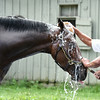 Moreno at Saratoga 8/24/2014.<br /> Coglianese Photos/Susie Raisher