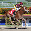 Sweet N Discreet wins the 2014 Florida Sunshine Millions Distaff Stakes.<br /> Coglianese Photos/Lauren King