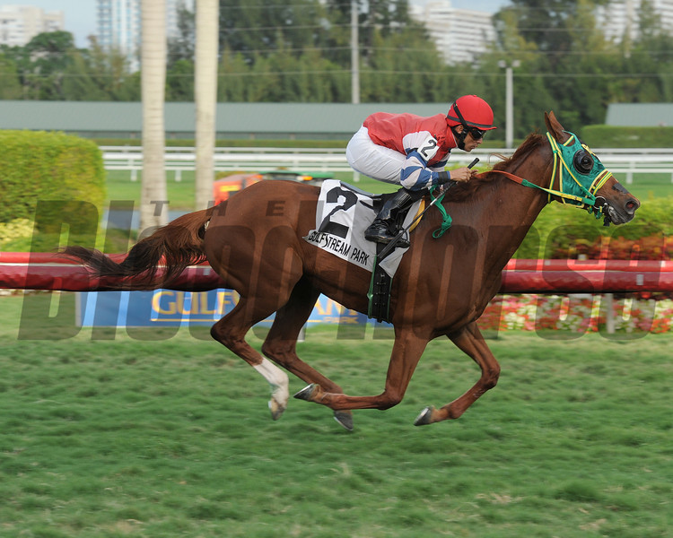 Parranda wins the 2014 Suwanee River at Gulfstream Park.<br /> Coglianese Photos