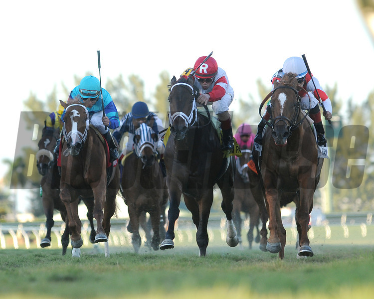 Pacesetter Storming Inti was all heart in denying tenacious favorite We Miss Artie by a head in a white-knuckled finish to the $100,000 Kitten's Joy Stakes at Gulfstream Park.<br /> Coglianese Photo