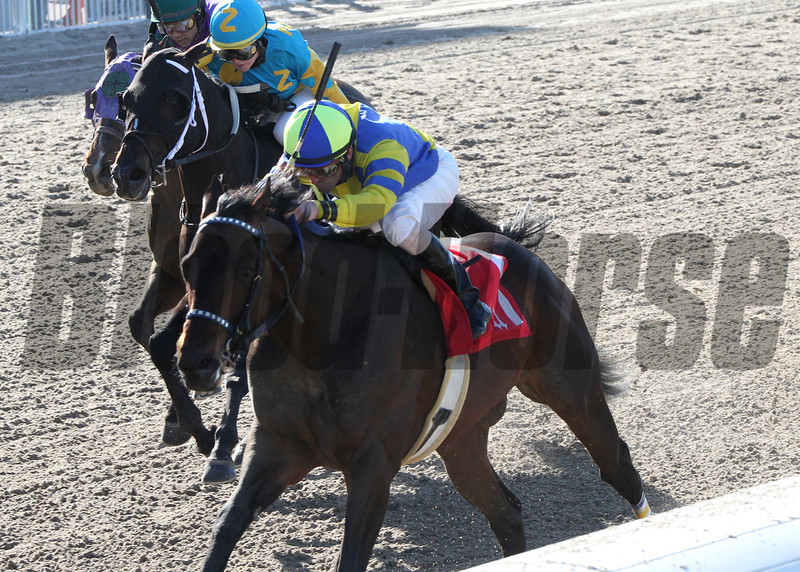 Fordubai wins the Louisiana Handicap at the Fair Grounds in New Orleans, LA Saturday, January 18, 2014.<br /> Robby Albarado was the winning jockey<br /> Amanda Hodges Weir / Hodges Photography