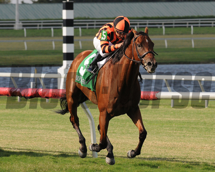 Little Mike wins the 2014 Flying Pidgeon Stakes at Gulfstream Park.<br /> Coglianese Photos/Shannon Spies
