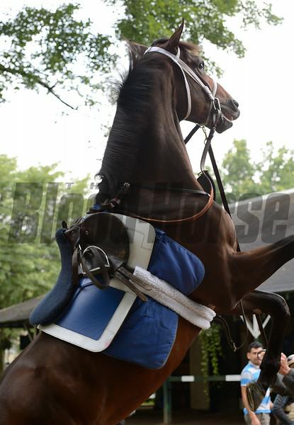 Jess's Dream at Saratoga Race Course, August 4, 2014<br /> Coglianese Photos/Susie Raisher