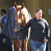 Princess of Sylmar at Belmont Park 6/1/2014<br /> Coglianese Photos/Susie Raisher