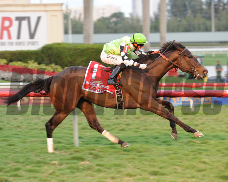 Lochte wins the Gulfstream Park Turf Handicap. 2/9/2014<br /> Coglianese Photos.