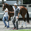 Untapable Belmont Park June 26, 2014<br /> Coglianese Photos/Susie Raisher